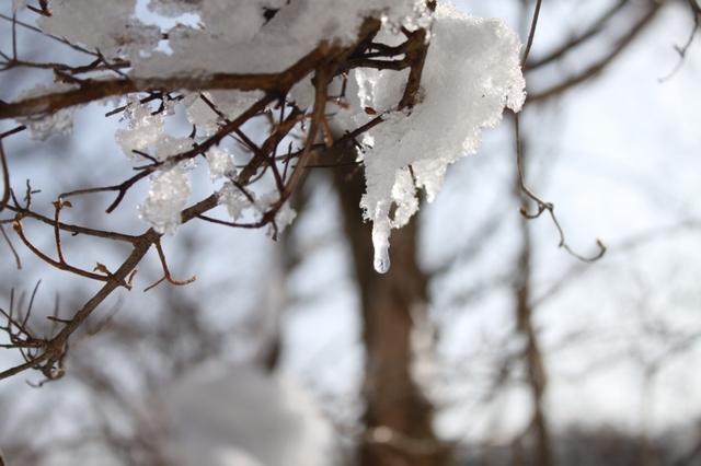 雪の贈り物(3)